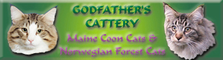 Godfather´s Cattery